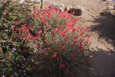 Southwestern Desert Plants | click to view larger