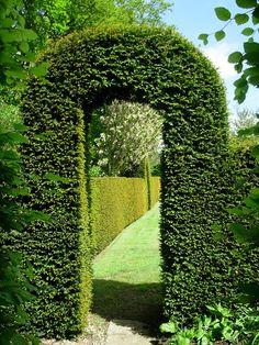 yew hedge arbor