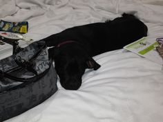 Onyx was pooped at #BlogPaws
