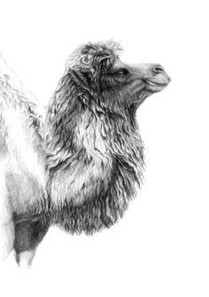 Bactrian camel print