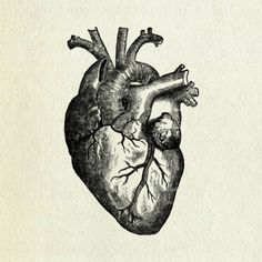 anatomical heart 2