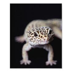 Leopard Gecko  by corbisimages