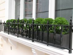 Buxus parade in a window box #plants