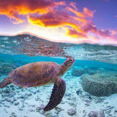 Sea Turtle over under
