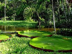 Parques Nacionais, Unidades de Conservação no Estado do Pará - Turismo e Cultura no Brasil