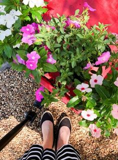 7 simple and easy small front porch decorating ideas. Check out what is trending and how to make your small front porch inviting with these tips. Diy Home Decor Projects, Garden Projects, Beautiful Flower Arrangements, Beautiful Flowers, Small Front Porches, Annual Plants, Container Flowers, Porch Decorating, Decorating Ideas