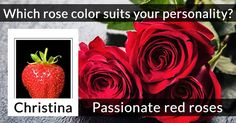 Which rose color suits your personality?