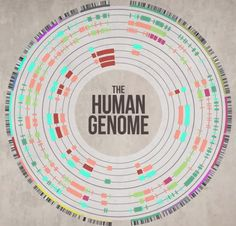 Welcome to Walesumbo Global : Thousand genome