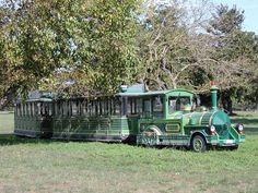 Trenino nel Parco di San Rossore
