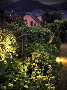 TUBE BLUX Park Lighting, Backyard Lighting, Outdoor Lighting, Led, Landscape Lighting Design, Green Facade, External Lighting, Light Building, Curb Appeal