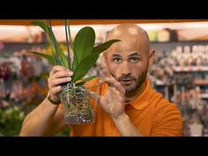 Come prendersi cura di un'orchidea - YouTube