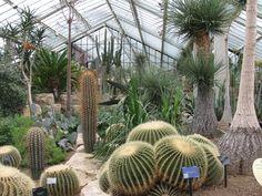 Cacti at Kew Gardens