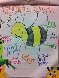 Bee Anchor Chart also charts for praying mantis firefly butterfly- a cuter twist on athought web Kindergarten Science, Preschool Lessons, Kindergarten Classroom, Classroom Activities, Preschool Writing, Preschool Art, Teaching Science, Classroom Ideas, Insect Activities