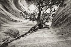 Black & White Photography Trees in the by SoulCenteredPhotoart, $11.00