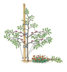 Spindle  Pruning