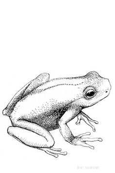 Pen and Ink Drawing of a Leopard Frog on Lily Pad, Print