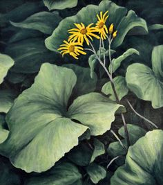 Ligularia, original oil on canvas by Lewis Bryden | R. Michelson Galleries
