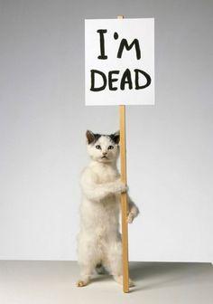 David Shrigley CAT (2007) taxidermy, wood, paper, acrylic