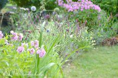 Mein Garten im August. My garden in august. Phlox, Teucrium, Echinops, Allium.