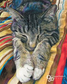 Sleeping grey and brown tabby cat on a brightly by chromaddict, $20.00