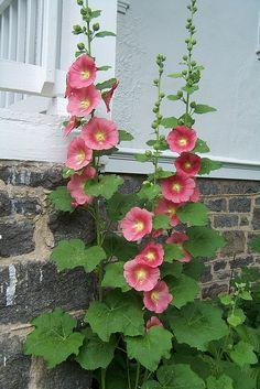 PaperNest, Garden, pink Hollyhocks, grey stone work