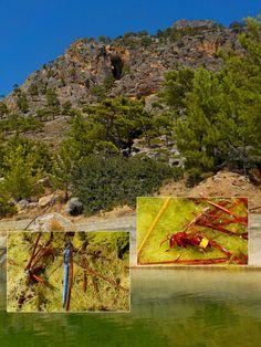 https://flic.kr/s/aHsm5tHBcs | 131 To Orino | Life in enchanting mountain streams in this week's #CreteNature blog: To the village of Orino. bit.ly/2xRJuLH