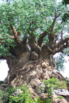 Old tree ~ South Africa...is what the photo says but as I've been told it's really a Disney World creation!