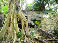 Distillery ruins, Tortola, British Virgin Islands.