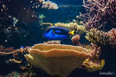 Hello there 👋🏼 #london #travel #livetravelchannel #huffpostgram #bbctravel #travelgram #londonzoo #zoo #fish #dory #amazing #color #colorful #beautiful #sea #photography #canonphotography #canon #550D #findingdory #coral #coralreef by gianlucagius. sea #canon #canonphotography #550d #dory #beautiful #fish #travelgram #color #colorful #coral #london #zoo #livetravelchannel #findingdory #photography #bbctravel #amazing #londonzoo #huffpostgram #coralreef #travel #micefx [Follow us on Twitter…