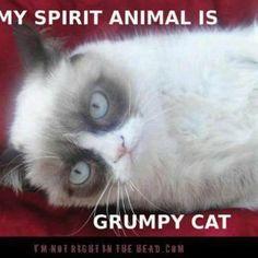 Grumpy Cat - http://tmblr.co/ZPNP8u1MU46kk  http://www.facebook.com/goreydetails http://twitter.com/GoreyDetails