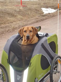Novel Dog Bike Trailer- I know it seems crazy, but I want to take my lab with me on long rides and I still want her legs to work later in life! Travel Trailer Tires, Dog Bike Trailer, Biking With Dog, Side Car, Diy Dog Bed, Dogs Of The World, Dog Life, Best Dogs, Rolls Royce