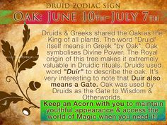 Who's born between June 10th - July 7th? Druid Magic here. http://www.magicalrecipesonline.com/2016/04/druids-magical-trees-of-year-celtic.html