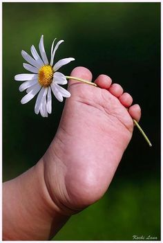 Kelly's baby feet looked like this but I don't think she was coordinated enough to hold a daisy between her chubby toes