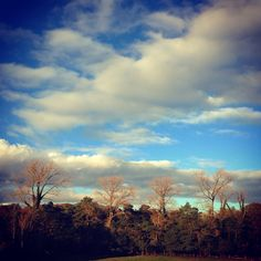 Autumn passes into winter: the tall trees are nearly  bare of leaves. They stand tall and free in the sky with the evergreen shrouds sheltering their trunks. #autumn #winter #trees #bare #evergreen #deciduous #interesting #landscape #scene #view #clouds #sky #bucolic #nature #trees #beautiful #wild #english #romance #love #sunshine