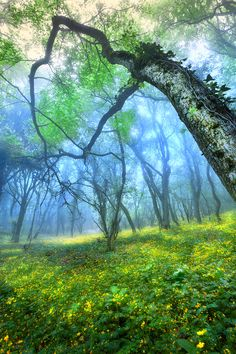Mystical forest   ♥ ♥ www.paintingyouwithwords.com