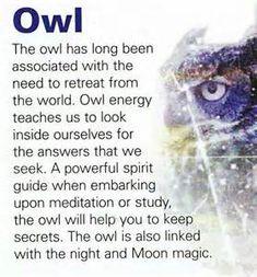 owl spirit animal quotes - Bing Images
