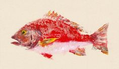 "Limited Edition Print Title: Red Snapper Size: 18.75"" x 11"" Beautifully detailed and vibrantly colored print of original Red Snapper fish rubbing. Image is printed on 100% cotton acid-free fine art paper with fade resistant archival ink. Each print is signed and numbered from a Limited"