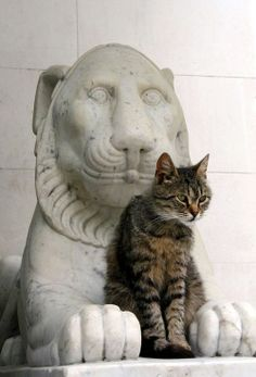 Cat on Statue of lion