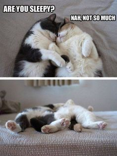 What cats do best !!