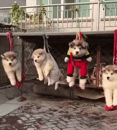 We're so fun to ride these things - Animated GIF Puppies Gif, Cute Puppies, Funny Dogs, Funny Animals, Cute Animals, Dog Fails, Cute Puppy Videos, Funny Cute, Animated Gif