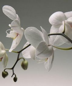 Witte orchidee <3
