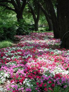 Dallas Arboretum  -- Adult (13-64) $15, Seniors (65+) $12, Children (3-12) $9, Kids under 3 Free. Onsite self parking - ten dollars.
