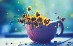 petals around yellow daisies in a cup, macro, board, bokeh, close up, fresh, little, high resolution photography wallpaper, ultral, 4k, flower, vintage