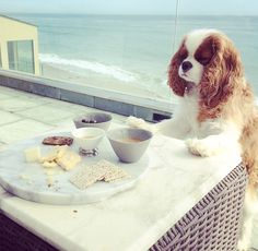 Dear Mom, Today I enjoyed a nice cheese plate. Love, Finley