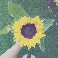 Summer is not my favorite season but I love sunflowers, especially when they are a gift from my florist🌻 #thisishomebnb #summer #sunflower #mygarden