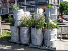 Industrial container gardens!