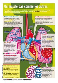 """Infographie Le Petit Quotidien - extraite de la VS """"Prends soin de ton cœur pour grandir en bonne santé"""" pour la Fédération Française de Cardiologie - www.playbac-editions-speciales.fr"""