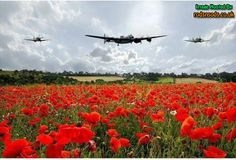 Quality aviation art and aviation art prints in a wide variety of finishes. Featuring The Lancaster Bomber over a field of Poppies. Lancaster Poppy Fly Past. Ww2 Aircraft, Military Aircraft, Poppy Images, Lancaster Bomber, Flanders Field, Ww2 Planes, Battle Of Britain, Remembrance Day, Royal Air Force