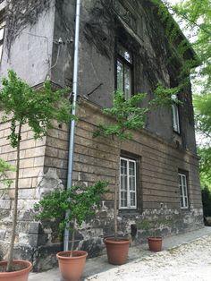 ELTE Füvéskert