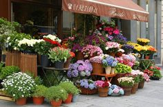 Paris florist shop ~ SACRED POOL IMAGES ©2006
